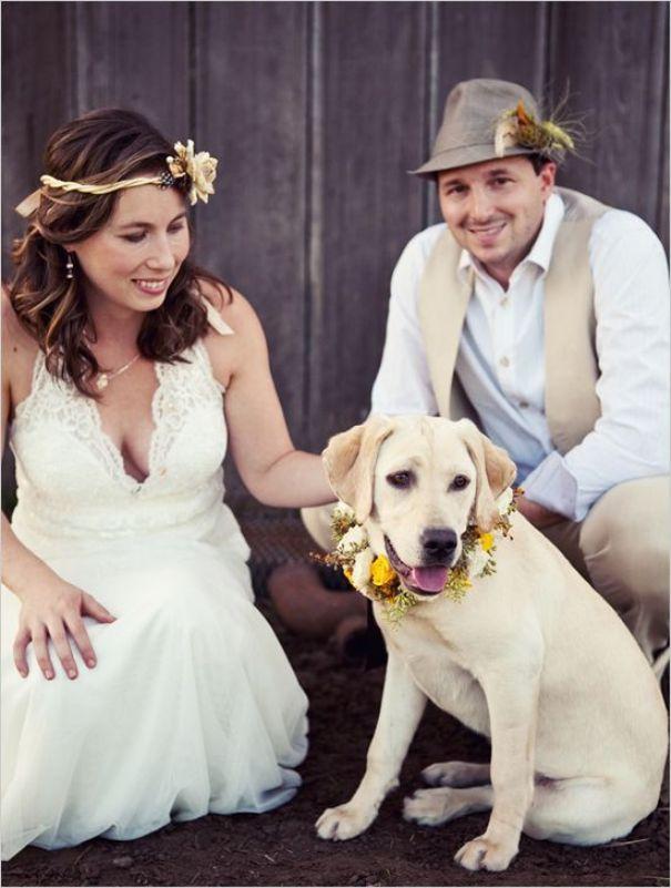 Hochzeit Mit Hund Humming Heartstrings